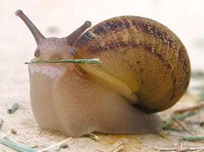 https://jabortnick.files.wordpress.com/2012/03/b6128-snail-j-p.jpg?w=400&h=299